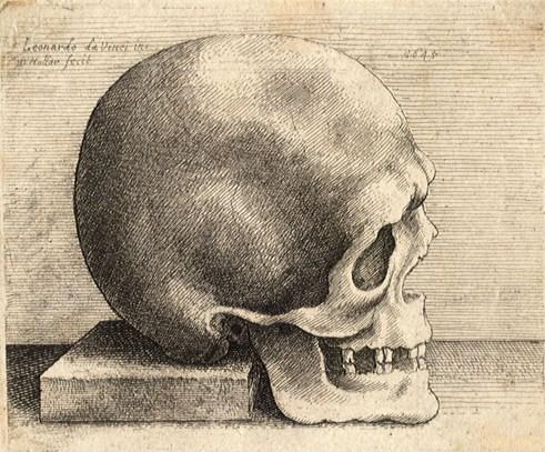 skull by Da Vinci