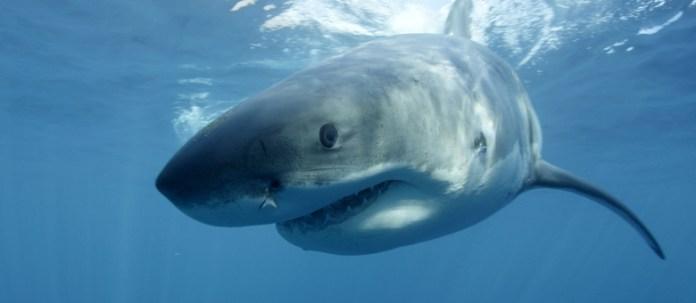 A jovem estava fazendo mergulho em uma praia de Maui, quando foi atacada pelo tubarão AP