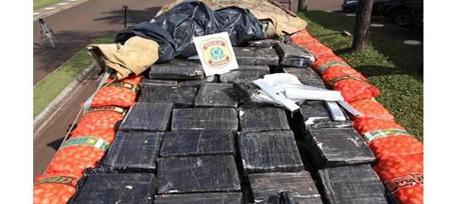 Tabletes de maconha estavam escondidos sob carga de cebolas Foto: Polícia Federal / Divulgação