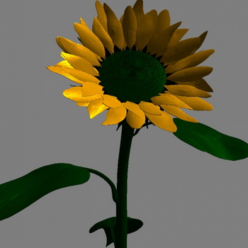 Sunflower 3D Models Obj Mtl Format 3D Model Download