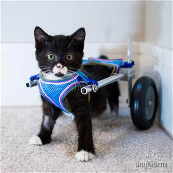 wheelchair for cats chair covers with arms 3d printed helps a kitten walk again