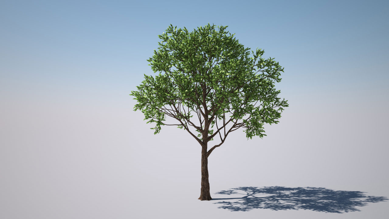 forester tree library 3dquakers