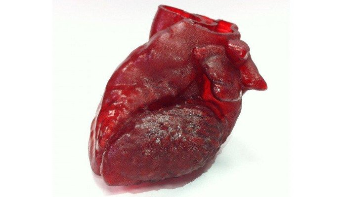 3d printed heart organ