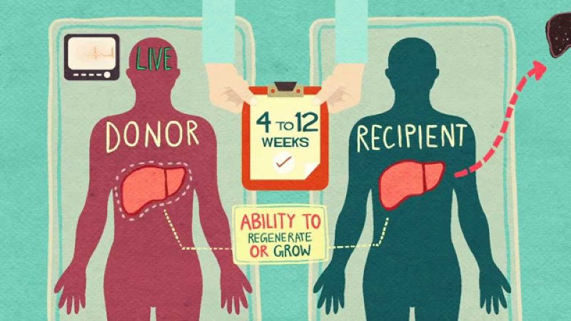 Illustration depicting an organ donor and recipient