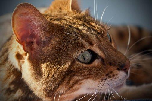 Wat ziet Bennie de kat?