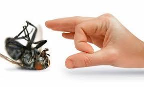 "<img src=""https://i0.wp.com/www.3l-sharq.com/wp-content/uploads/2015/03/مكافحة-حشرات.jpg?resize=289%2C174&ssl=1"" alt=""وصف الصورة هنا""></img>"