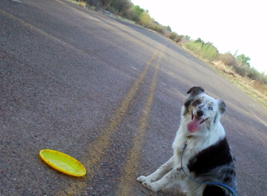 Merlin Frisbee Road