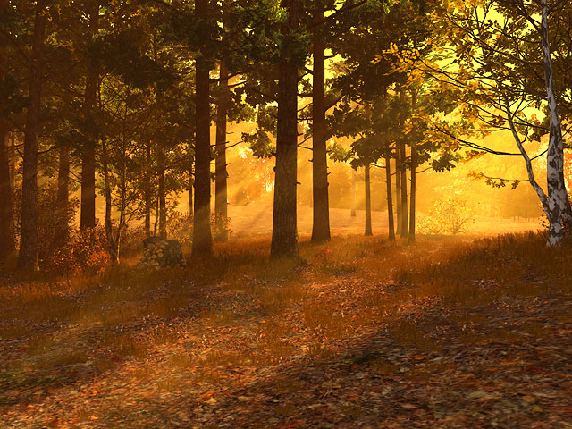 Fall Halloween Desktop Wallpaper Nature 3d Screensavers Autumn Forest A Sunset In The