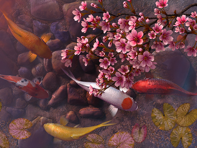 How To Get New Live Wallpapers Iphone X Fish 3d Screensavers Koi Pond Sakura