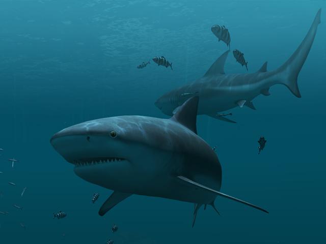 3d Koi Pond Live Wallpaper Fische 3d Bildschirmschoner Sharks Animierte