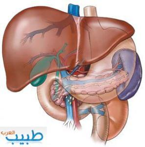 الكبد تشريح  وظائف فحوصات زراعة الكبد The liver