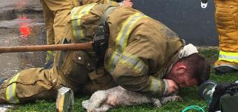 Nalu, the dog, saved by quick thinking Santa Monica firefighter who administered CPR
