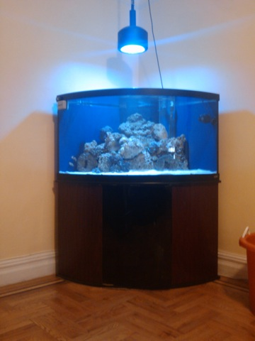 Photo This is my 92 gallon corner bow front in the