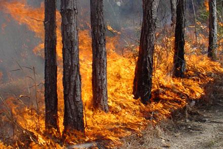 Image result for пожар иудейские горы
