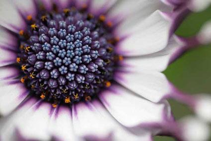 Favolose ed incantevoli foto di fiori - macro