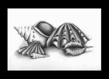 Shell Stilllife