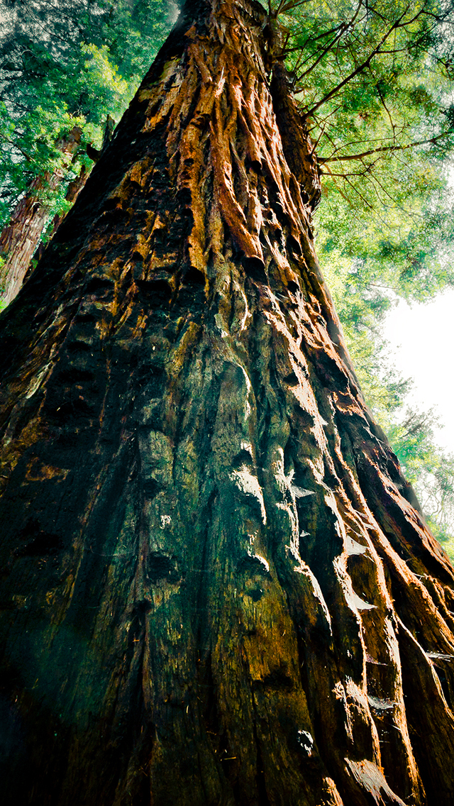 Wooden Tree Forest 3Wallpapers iPhone Wooden Tree Forest