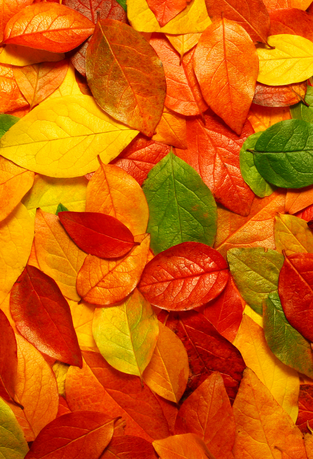 Autumn Leaves 3Wallpapers iPhone Autumn Leaves