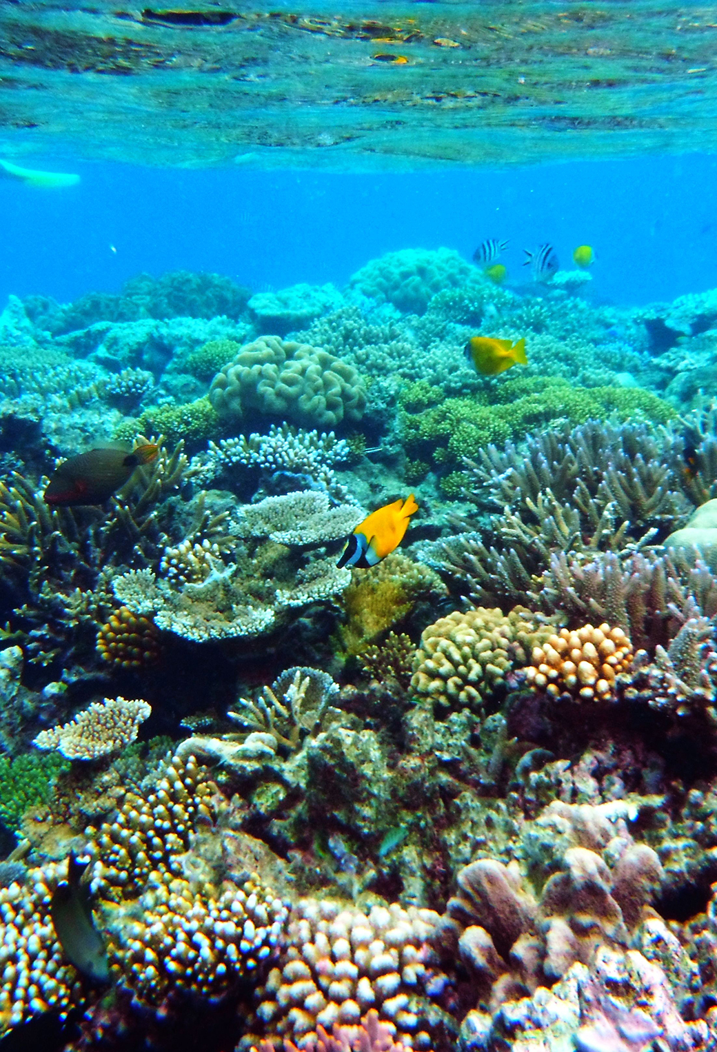 Reef Girl Wallpaper Hd Great Barrier Reef Wallpaper For Iphone X 8 7 6 Free