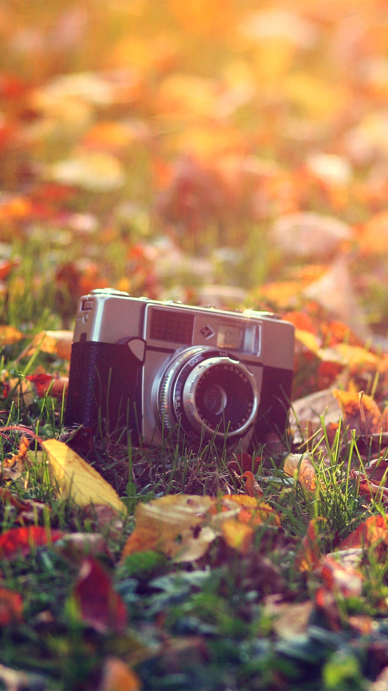 Hipster Fall Wallpaper Vintage Camera Wallpaper For Iphone X 8 7 6 Free