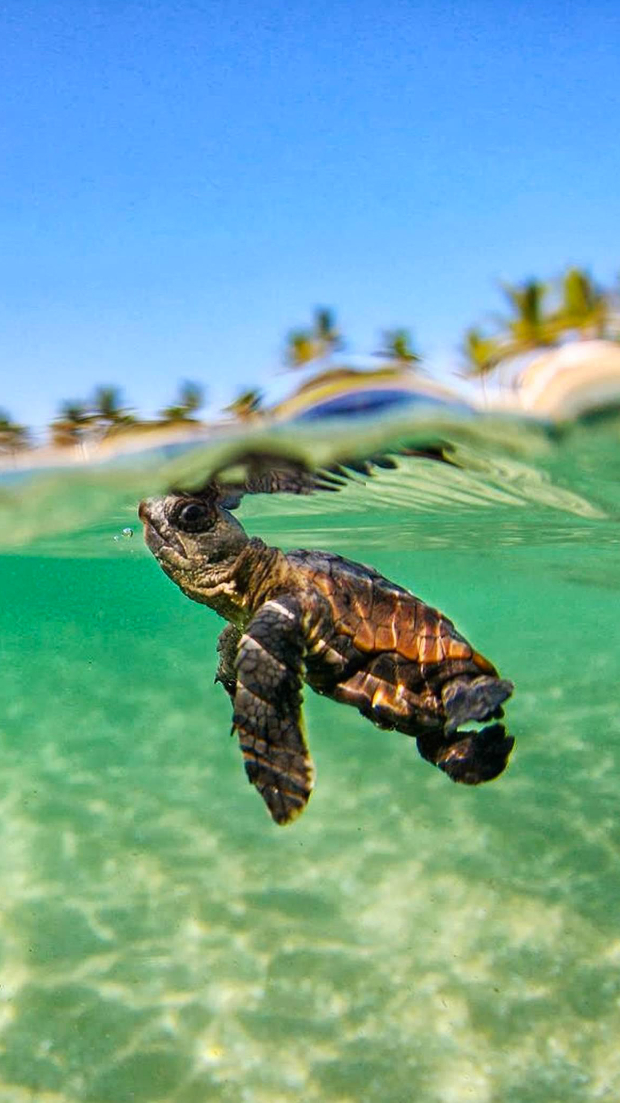 Cute Turtle Wallpaper For Iphone Turtle Lagon Wallpaper For Iphone X 8 7 6 Free