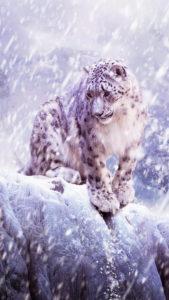 Léopard Léopard Des Neiges 3Wallpapers iPhone Parallax 169x300 Leopard of snow
