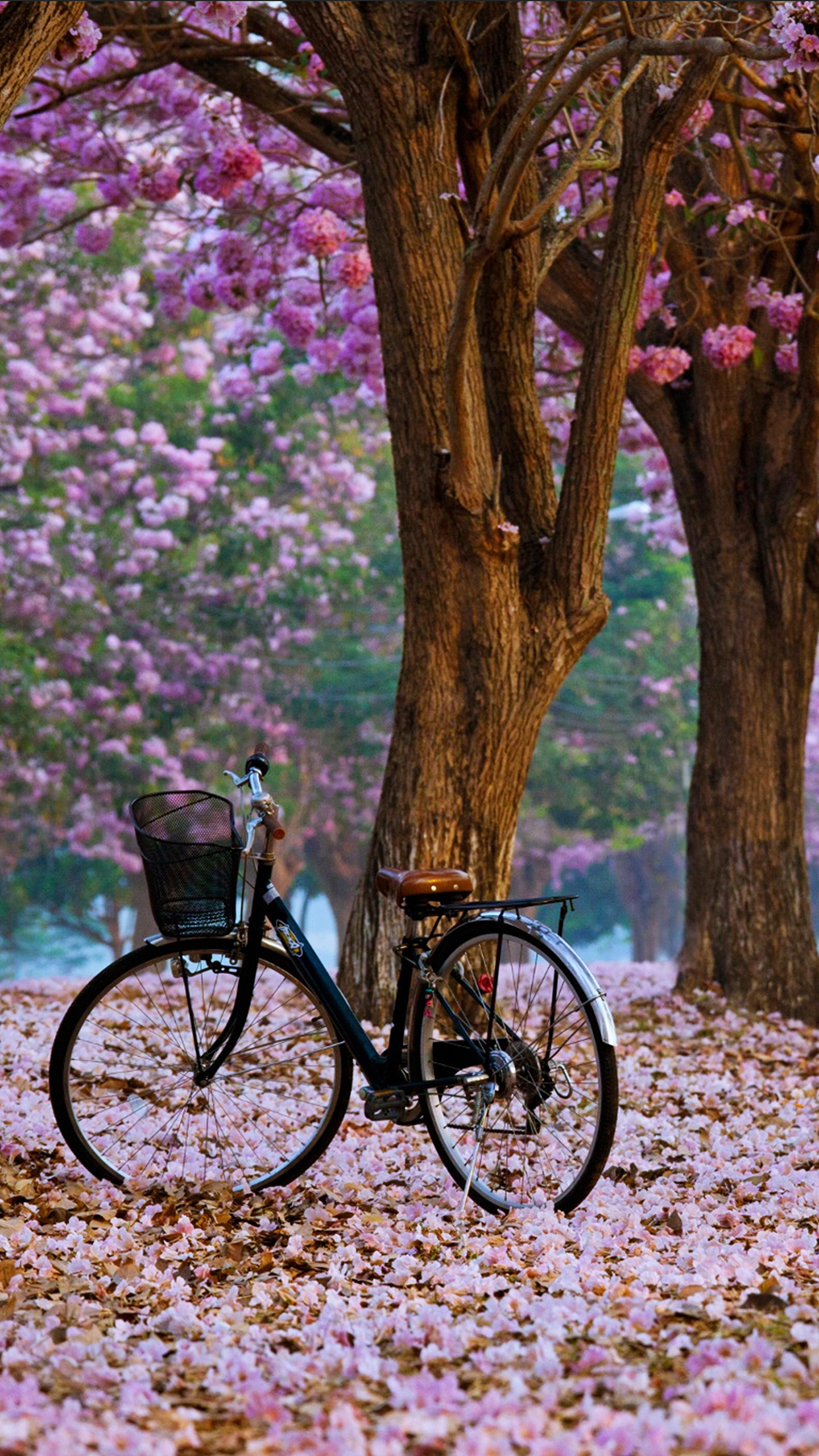 Fall Wallpaper Iphone 7 Plus Spring Bike Wallpaper For Iphone X 8 7 6 Free