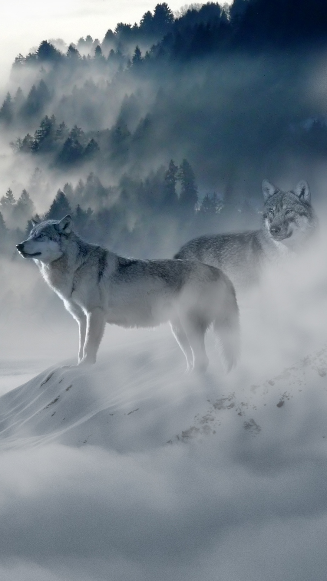 iphone wallpaper wolf wolves predators fog snow mountains Wolf