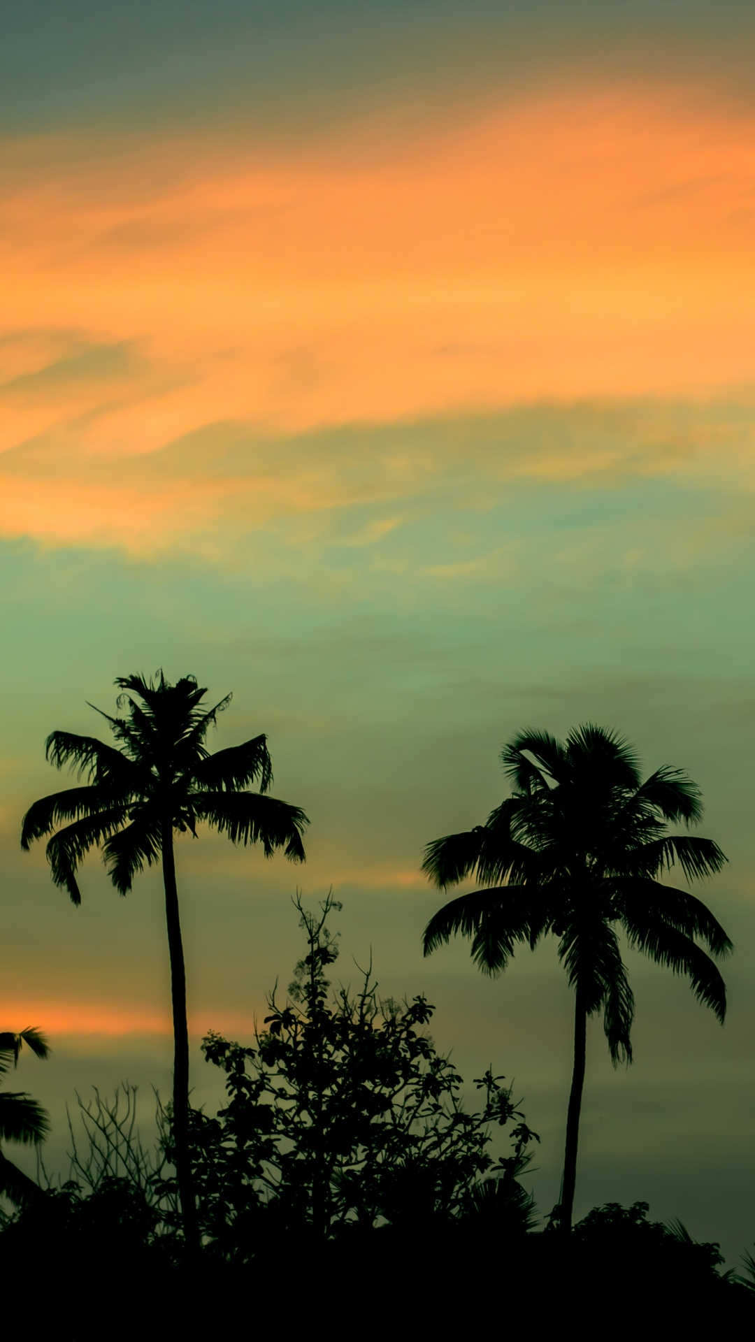 iphone wallpaper palms sunset sky Nature