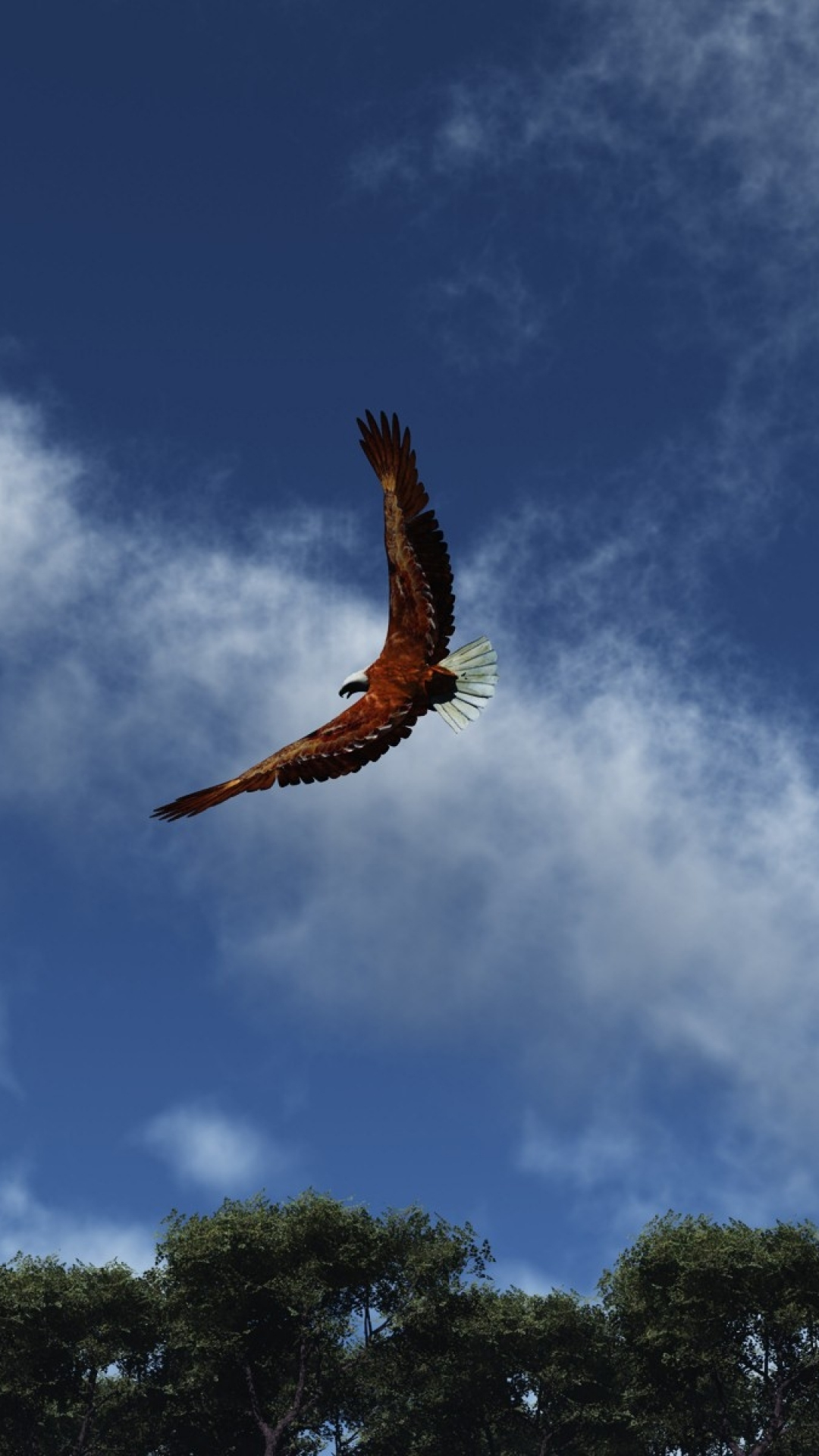iphone wallpaper eagle sky clouds Eagle