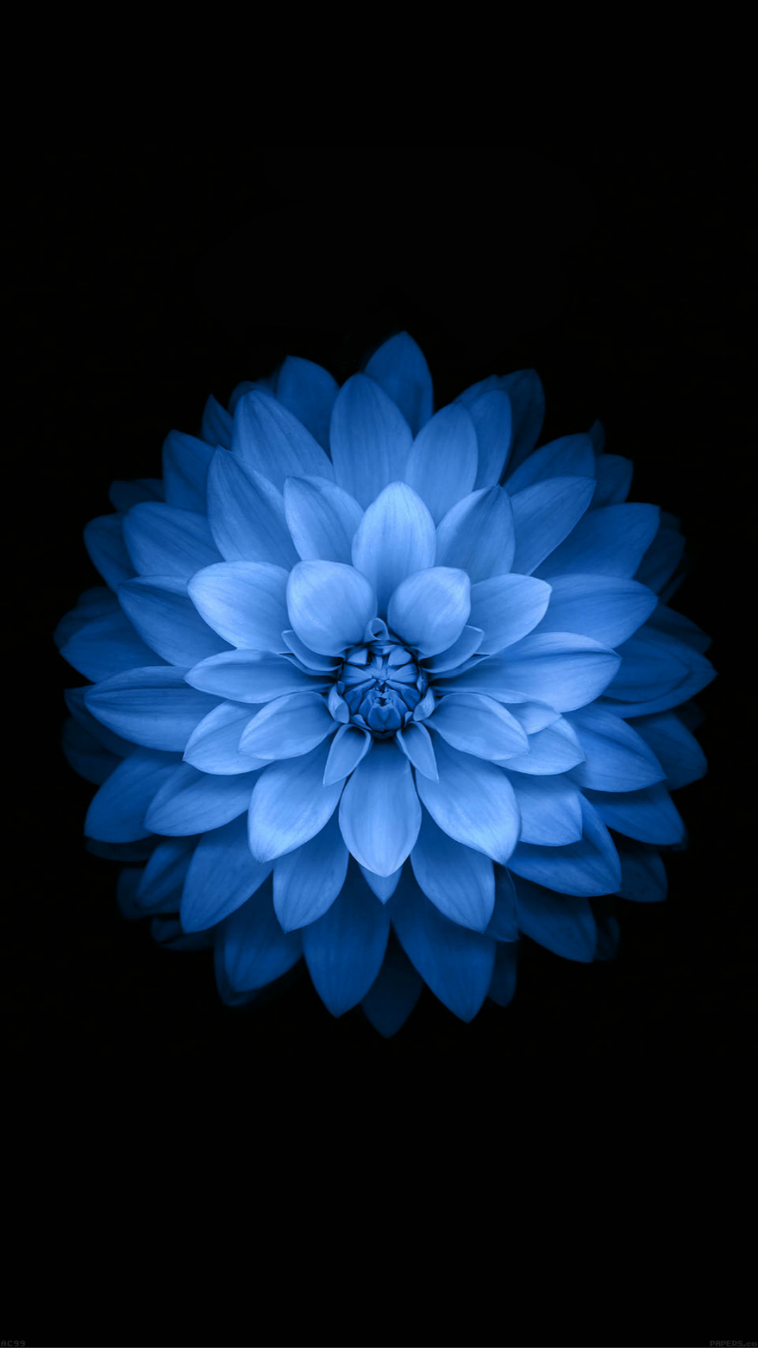 iPhone Wallpaper flower Blue Lotus Flower