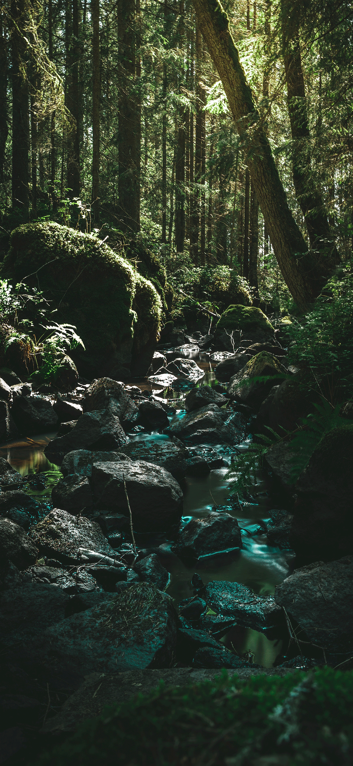 iPhone wallpaper forest river Forest