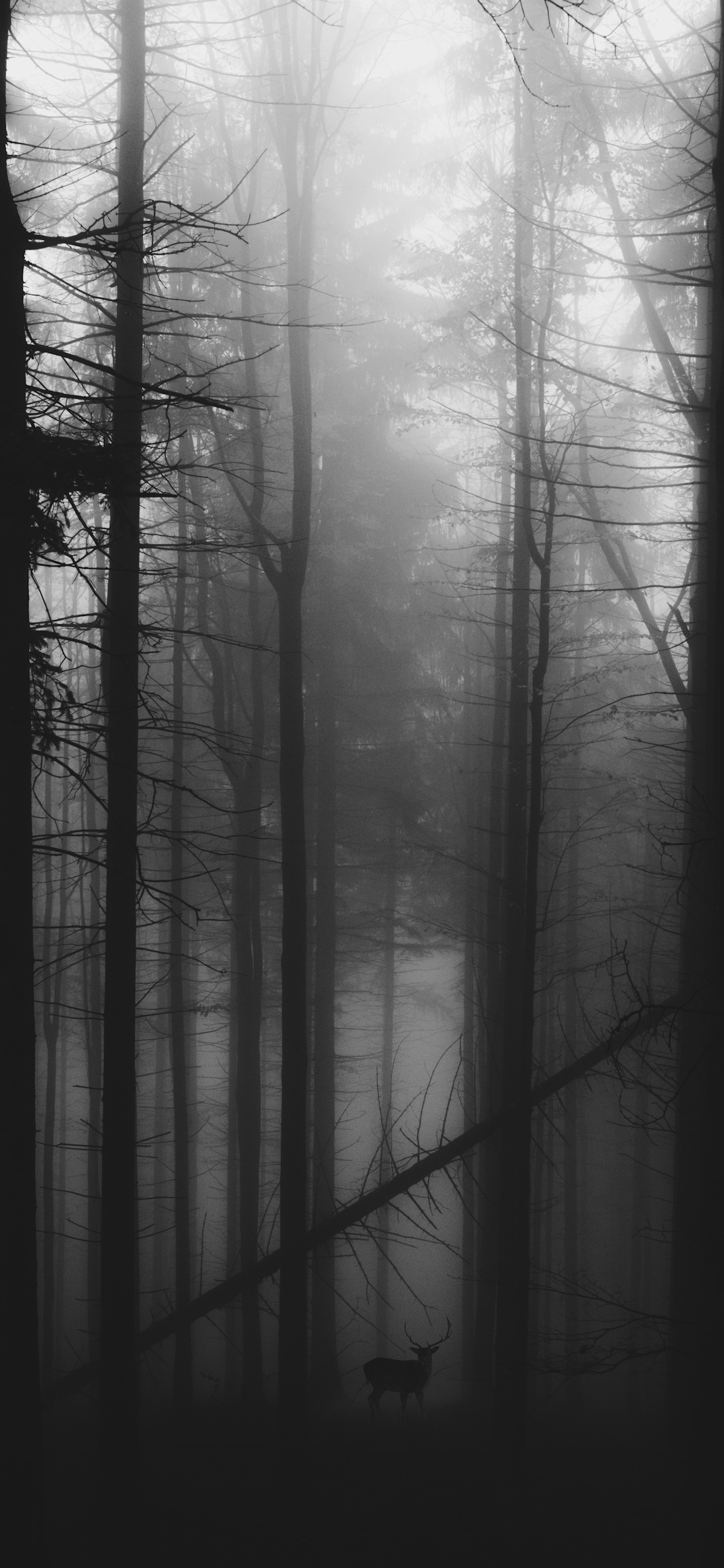 iPhone wallpapers black white forest alaska Black and White
