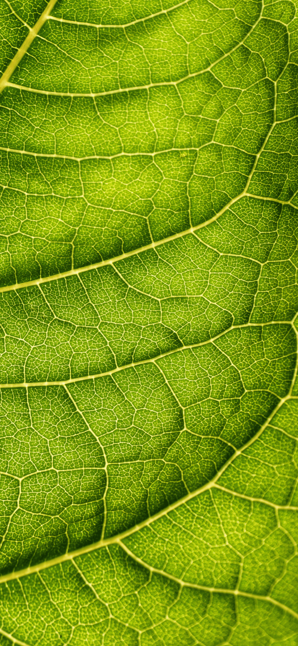 iPhone wallpapers texture leaf back Texture