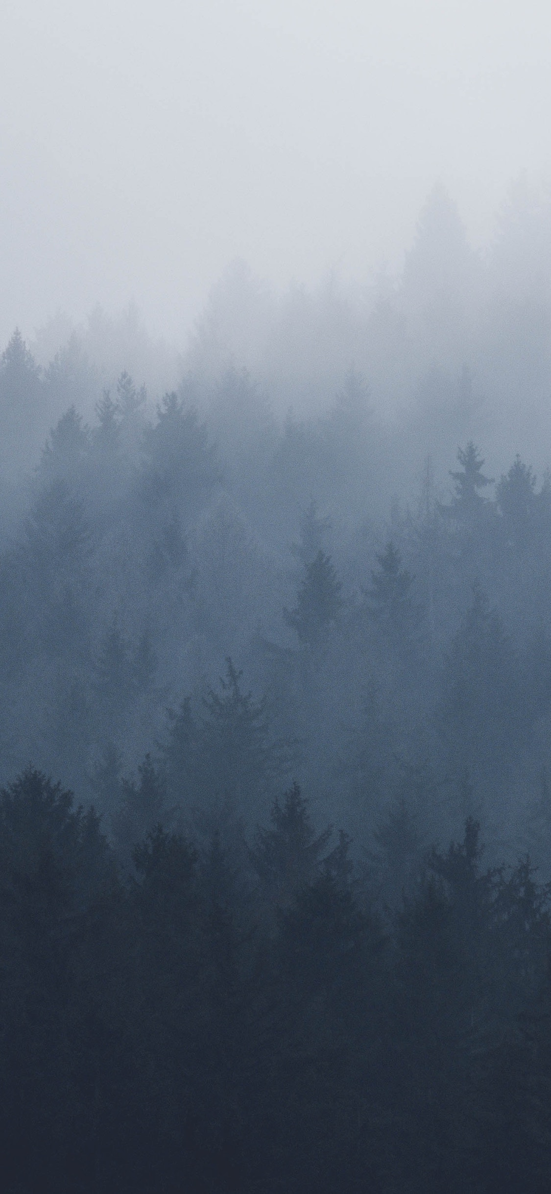 iPhone wallpapers forest fog white Forest