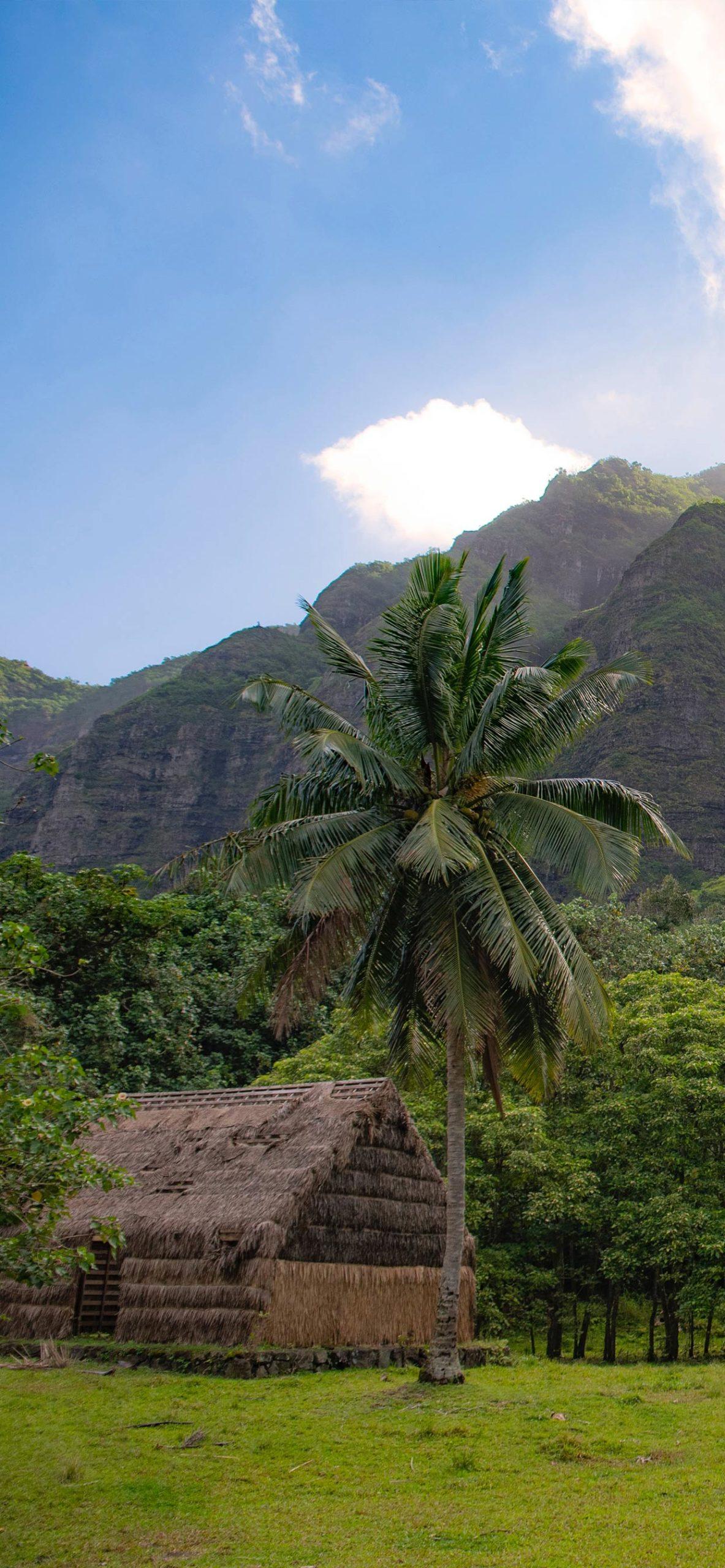 iphone wallpaper polynesia nature scaled Polynesia
