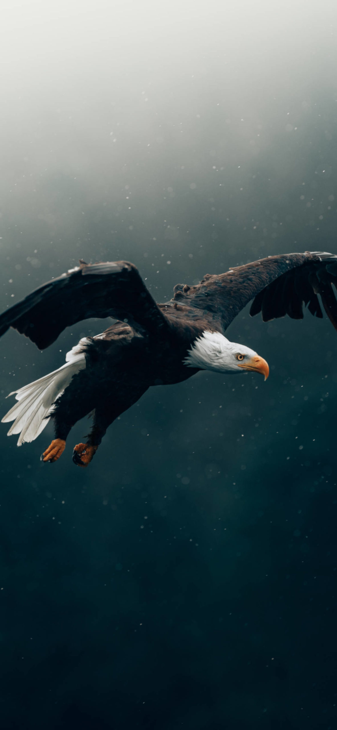 iPhone wallpapers wild life eagle scaled Wild Life