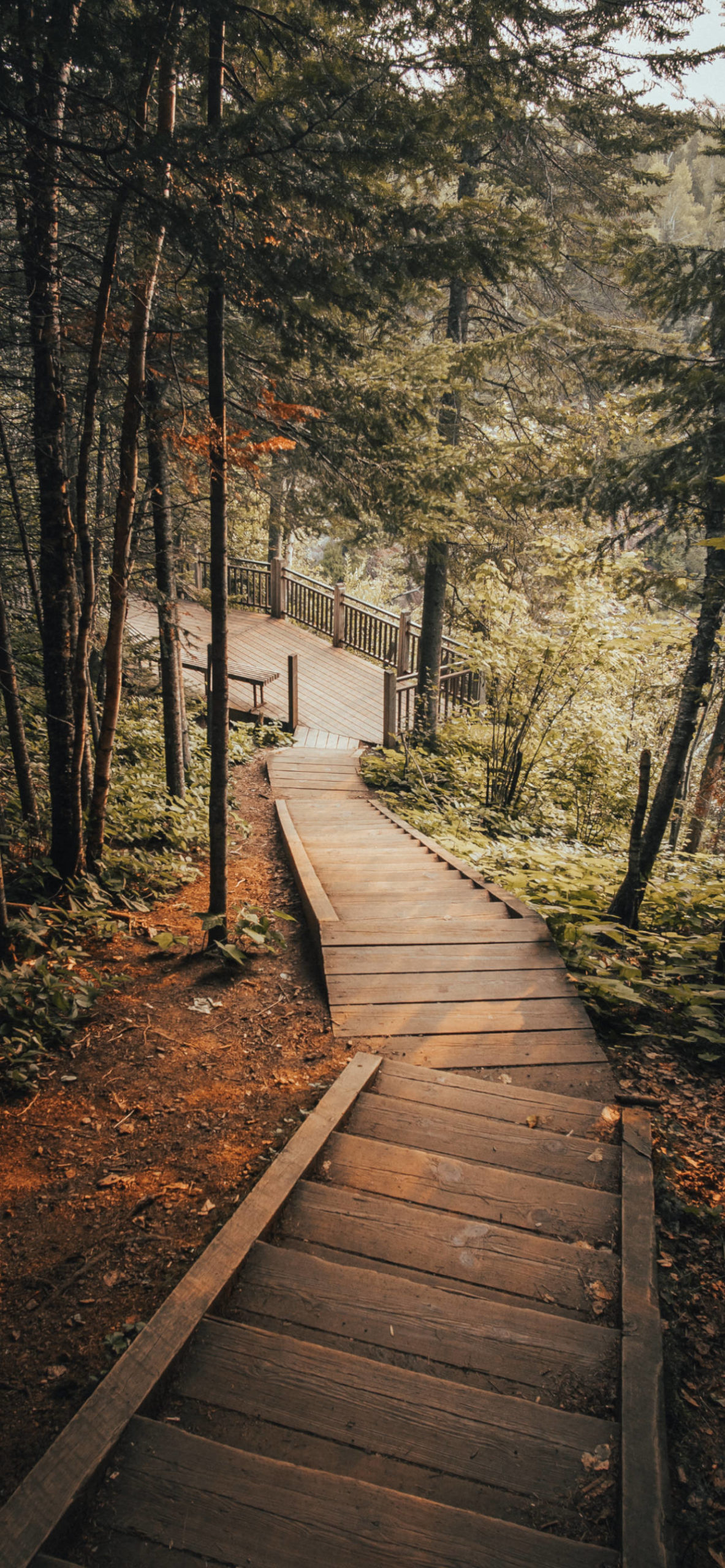 iPhone wallpapers stairs forest scaled Stairs