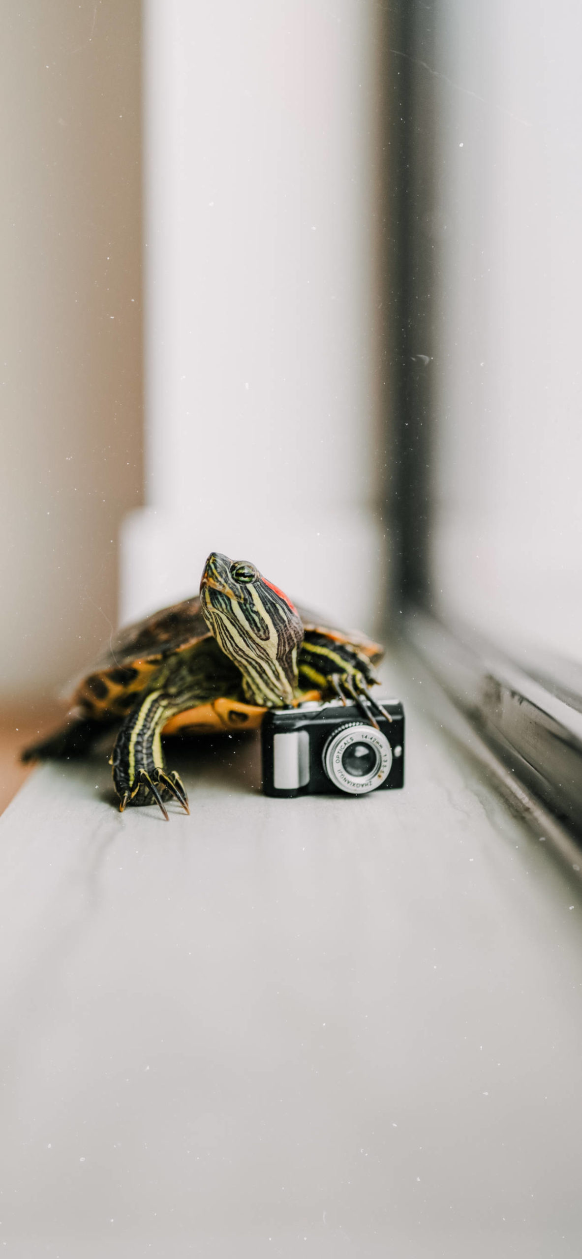 iPhone wallpapers turtle camera scaled Turtle