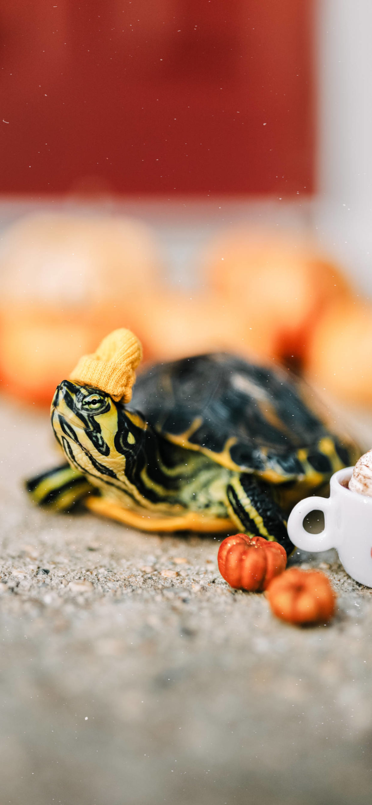 iPhone wallpapers turtle pumpkin hat scaled Turtle
