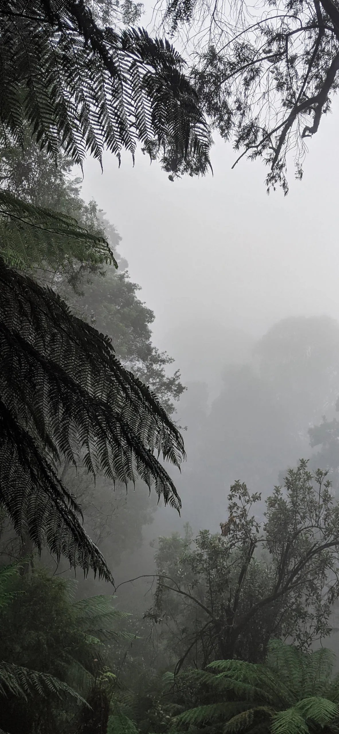 iPhone wallpapers jungle fog scaled Fog