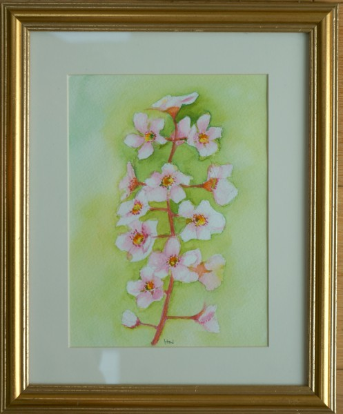 Blossom by Helen Norfolk, Watercolour on Paper