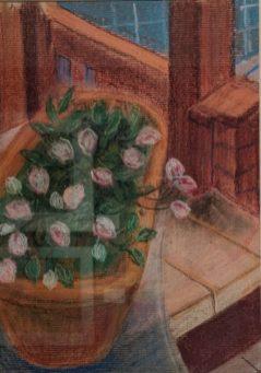 My Window Box by Ann Billimoria