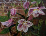 Pink Hellebore by Joan Russell-£50