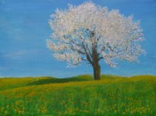 Tree Blossom by John Dawson