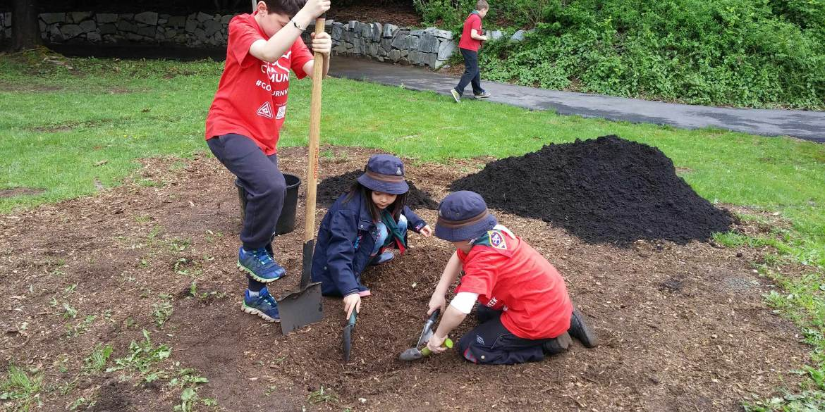 Help Scouts Plant Trees