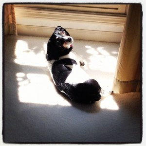 Ralphie In The Sun