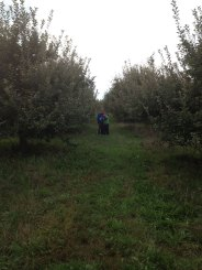 Boys In The Orchard