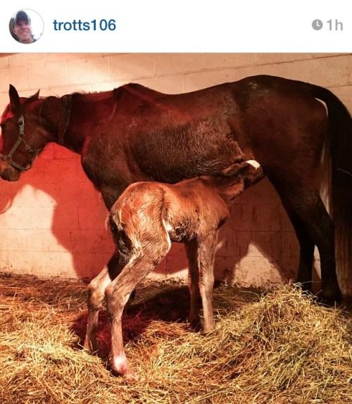 Trotts Horses
