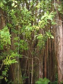 Hawaii Trip 2003 (136)